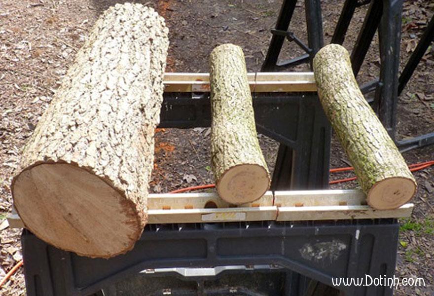 Gỗ sồi là gì? Đặc điểm sinh thái của cây gỗ sồi