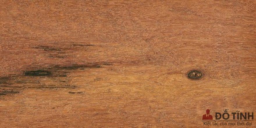 Tìm hiểu về dòng gỗ căm xe - Ảnh: Internet