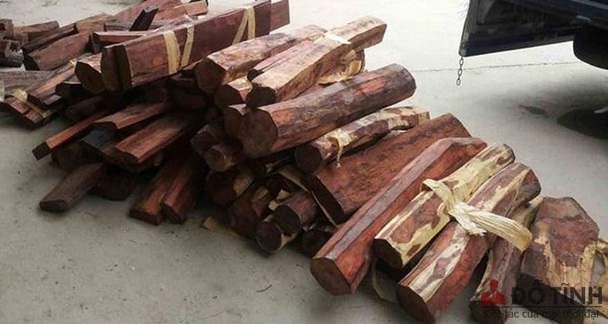 Hình thái của cây gỗ trắc là gì? - Ảnh: Internet